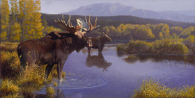North Country -  Moose By Pat Pauley