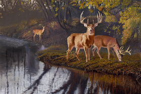 Autumn Treasures- Whitetail by Pat Pauley