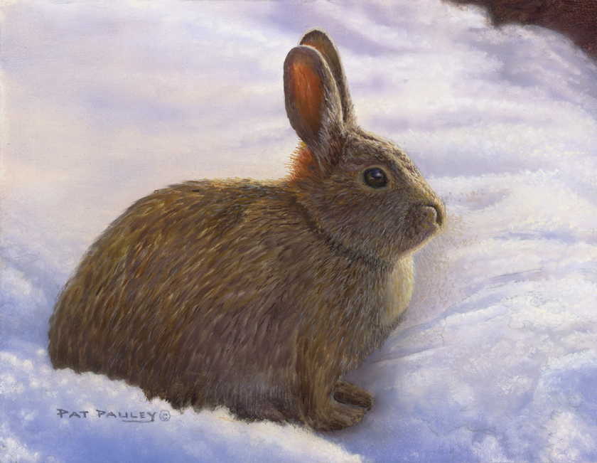 Snow Bunny Oil Painting by Pat Pauley