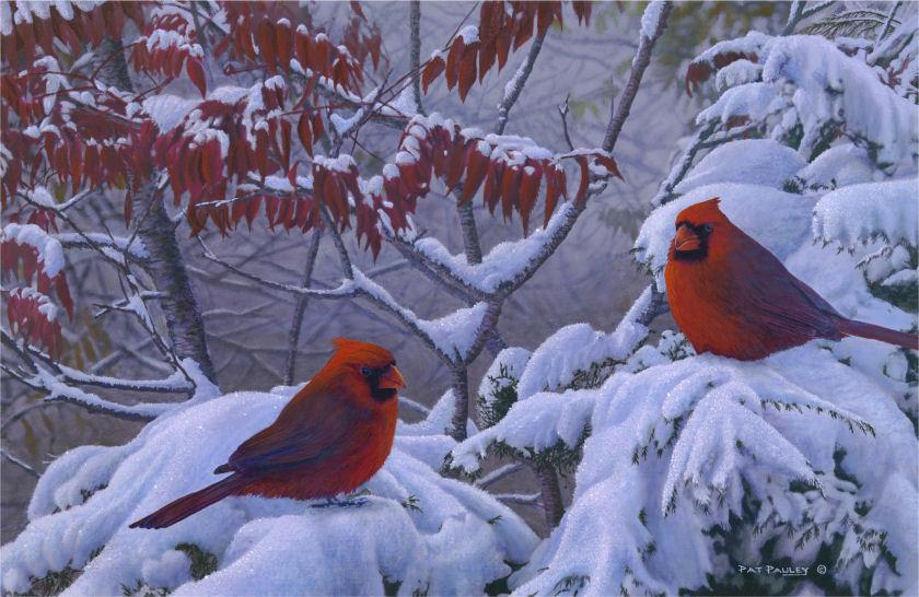 Return of Winter - Cardinals in Snow Reproduction Pat ...